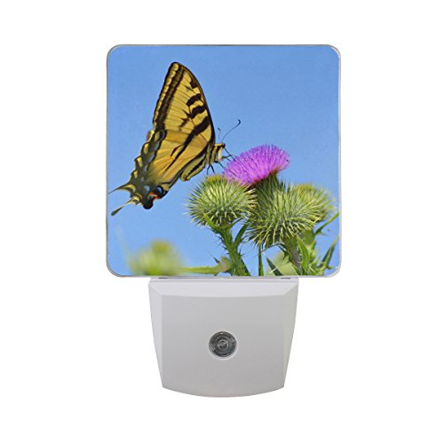 Naanle Set of 2 Swallowtail Butterfly On Thistle Flower Purple Dandelion with Blue Sky Spring Floral Design Auto Sensor LED Dusk to Dawn Night Light Plug in Indoor for Adults