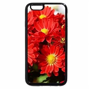 iPhone 6S Plus Case, iPhone 6 Plus Case, Hot Red Daisies