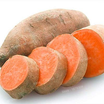 (zlking 100pcs/bag Sweet Potato Flores Vegetables as Fresh Food Fruit and Vegetable Garden Supplies Seeds Only for Home Garden Red)