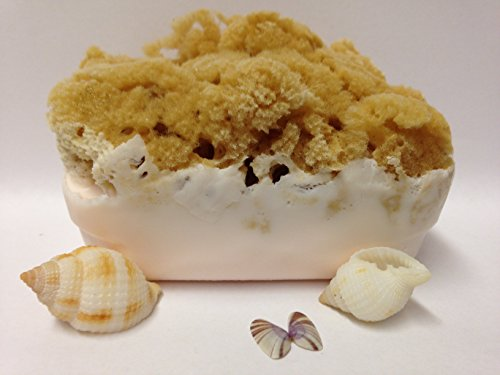 Olive Oil Soap and Goat's Milk Soap Bar with Attached Natural Organic Sea Sponge. *Hand Crafted in Florida* *All Natural Moisturizing Soap* Great Gift! Perfect Shower Sponge! All Natural Bath Sponge and Natural Bath Bar. *The Best Sea Sponge Soap (Goats Milk Olive Oil)