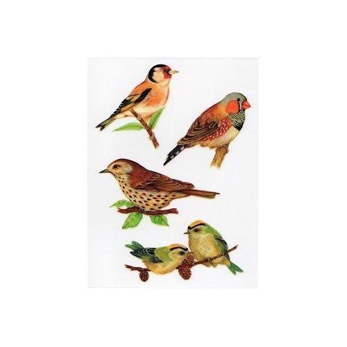 motivo uccello Adesivi per finestra