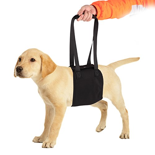PetAZ Dog Lift Support & Rehabilitation Harness, Support Sling Helps Dogs With Weak Front or Rear Legs Stand Up, Walk, Get Into Cars, Climb Stairs[XL]