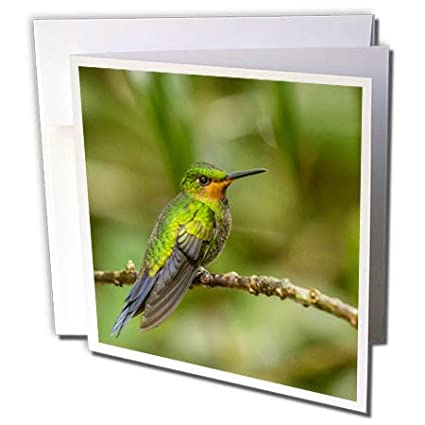 Amazon 3drose danita delimont hummingbirds costa rica 3drose danita delimont hummingbirds costa rica monteverde cloud forest reserve hummingbird on m4hsunfo