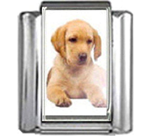 Stylysh Charms Labrador Retriever Puppy Dog Photo Italian 9mm Link DG266