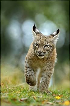 Eurasian Lynx on the Prowl Journal: 150 page lined notebook/diary