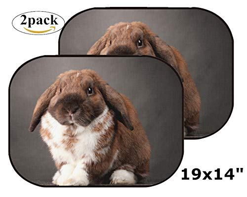 MSD Car Sun Shade Side Window Sunshade Auto 19 x 14 Universal Fit 2 Pack, Block Sun Glare, UV and Heat, Protect Car Interior, Image ID: 12979922 Lop Eared Rabbit on Grey Background