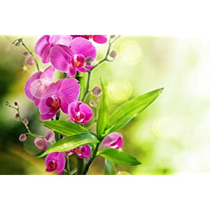 Orchid Flowers Art Print on Canvas,Wall Decor Poster 28x42 inches 30
