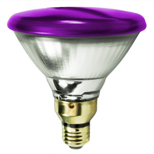 Purple Flood Light Bulb Outdoor