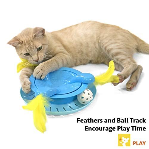 Amazon.com: Kitty City - Cubo de gato desplegable, para ...