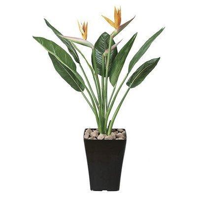 光触媒 人工観葉植物 光の楽園 ストレチアS花付 1.0m 195C300 B01IGBWEBM