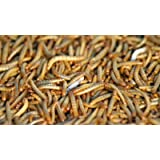 250 Live Mealworms - Small/Medium - Free Ship