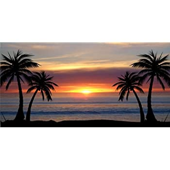 Amazon Com Palm Trees At Sunset Photo License Plate Free