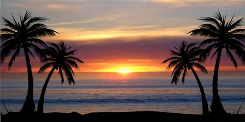 Palm Trees At Sunset Photo License Plate Free Personalization on this - Palms Online