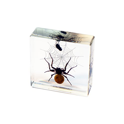 Spider Paperweight - REALBUG Spider & Fly Desk Decoration