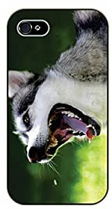 For Ipod Touch 5 Case Cover Case Grey Husky - black plastic case / dog, animals, dogs