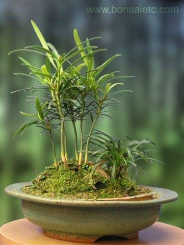 Indoor 'Wood by The Pond' Forest Bonsai Centerpiece