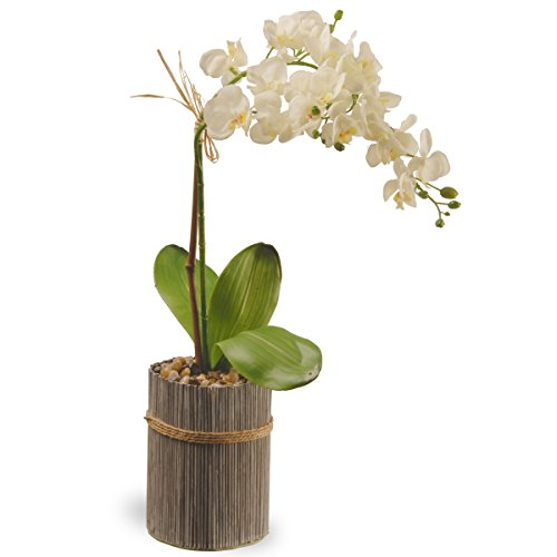 National Tree 20 Inch Garden Accents White Potted Orchid (GAPF30-20W) (Renewed) ()