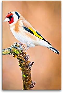 CALVENDO Lienzo Textil de 60 cm x 90 cm de Alto, Brillo de Colores alegres (Carduelis Carduelis) Sentado en una Rama de Imagen en Bastidor. Lienzo con impresión de Animales Tiere Animales