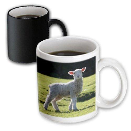 3D Rose 22784/_3Adorable Lamb New Zealand Magic Transforming Mug 11 oz Black//White
