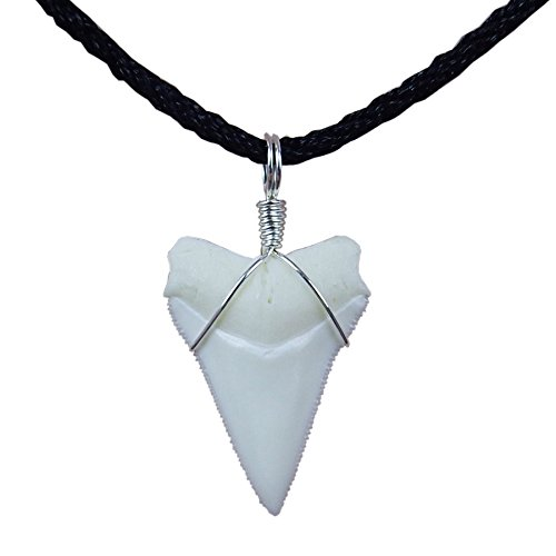 GemShark Real Shark Tooth Necklace 0.9 inch Sterling Silver Charm Pendant for Boys Girls Unisex (0.9 inch White Tip)
