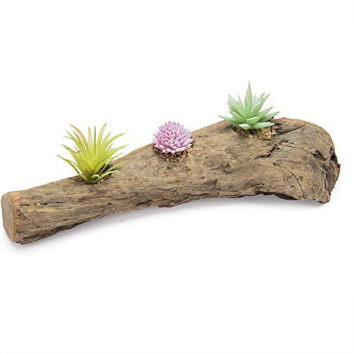 - MyGift Handmade Natural Driftwood Branch Succulent Planter, Tealight Candle Holder Centerpiece