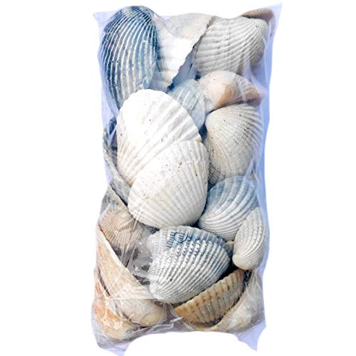 (THE OTHER TIDE Natural Variety of Cockles & Clam Shells - 8 Ounces - Beach Collected)