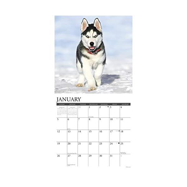 Just Siberian Husky Puppies 2020 Wall Calendar (Dog Breed Calendar) 2