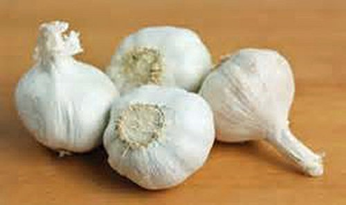 Fresh Garlic (GARLIC BULB (20 Pack), FRESH CALIFORNIA SOFTNECK GARLIC BULB FOR PLANTING AND GROWING YOUR OWN GARLIC)