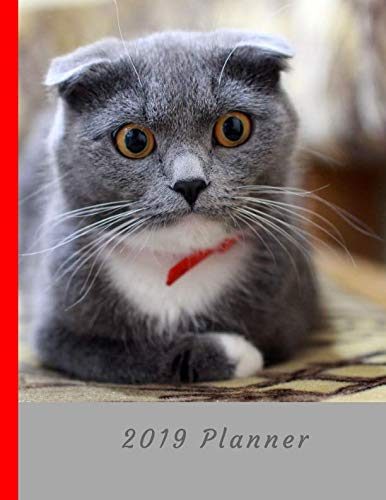 I Love Scottish Fold Cats 2019 Planner: Large Weekly Organizer Diary with Goal Setting & Gratitude Sections (Positive Life - Scottish Cat