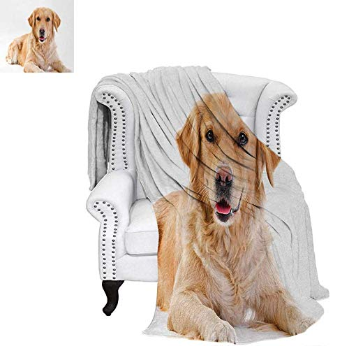 Velvet Plush Throw Blanket Young Pedigree Puppy Laying Over White Background Sweet Baby Dog Throw Blanket 60