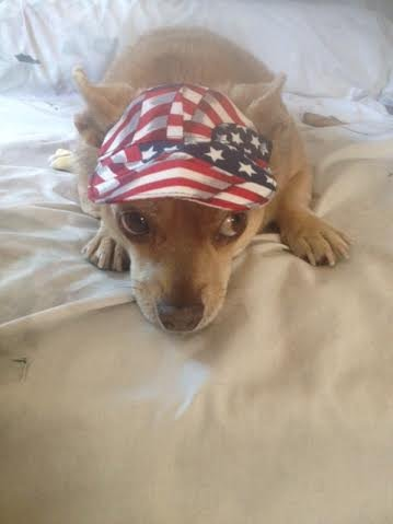Amazoncom Dog Hat Small Flag Pet Supplies