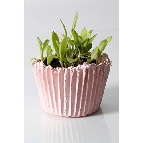 "Complete Organic ""Cupcake Garden"" Kit - PET GRASS hot sale"