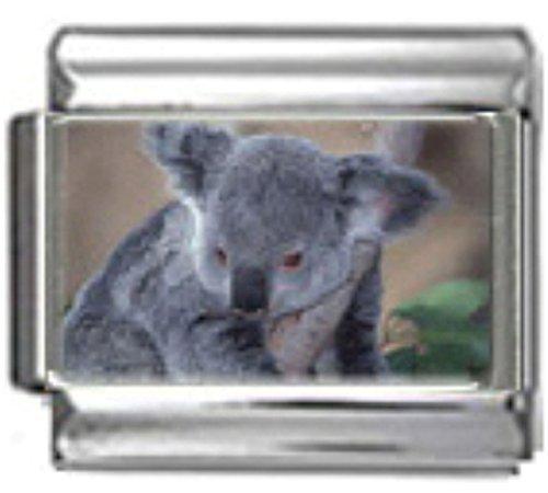 Stylysh Charms Koala Bear Australia Photo Italian 9mm Link AN051