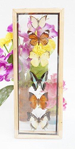 butterfly frames - 5