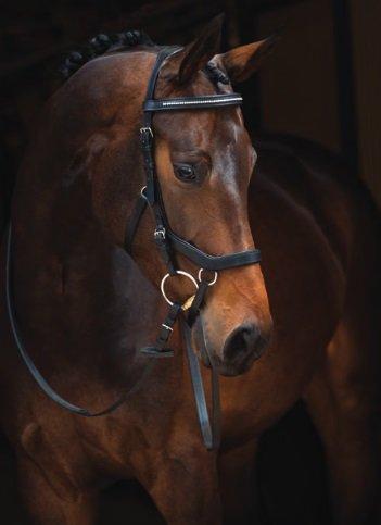 ランボーMicklemディアマンテ英語レザーUSA、ブラック – Large Horse   B01KVY4NMU