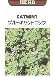 【種子】ブルーキャットニップ(キャットミント)