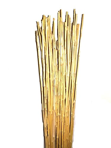 Empire Home Natural Thin Bamboo Stakes Over 5 Feet Tall - Pack of 20 (Natural Yellow)