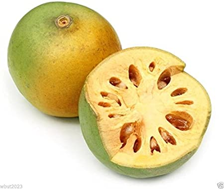 Bael Seeds Golden Apple Stone Apple Bengal Quince 100 Aegle Marmelos Seeds