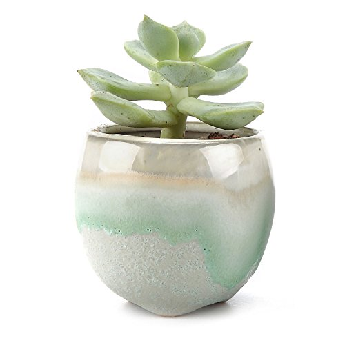 small flower pots with seeds - 9