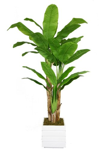 Leaf Planter - Laura Ashley VHX117211 78-Inch Banana Tree with Real Touch Leaves in 14-Inch Fiber Stone Planter
