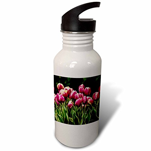 3dRose Danita Delimont - Flower - A cluster of red and white tulips with yellow and green striped leaf - Flip Straw 21oz Water Bottle (wb_227742_2) (Variegated White Tulip)