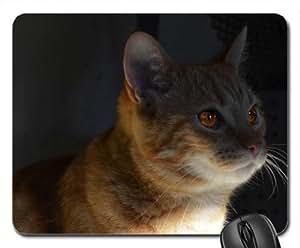 Cat Cute Cool Decorative Design Animal Cat Mousepad Rainbow Designs