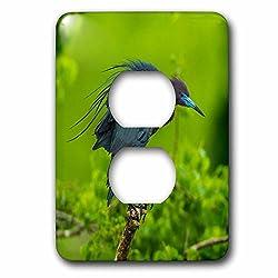 3dRose Danita Delimont - Birds - USA, Louisiana, Jefferson Island. Little blue heron on limb. - Light Switch Covers - 2 plug outlet cover (lsp_259378_6)