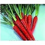 Pinkdose Vegetable - Carrot - Red Samurai F1-100pcs - Economy Pack