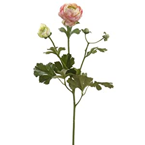 "22"" Ranunculus Spray Pink (Pack of 12) 29"