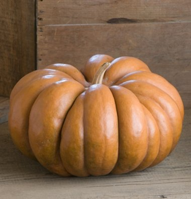 David's Garden Seeds Pumpkin Musque de Provence G2621 (Orange) 50 Open Pollinated Seeds