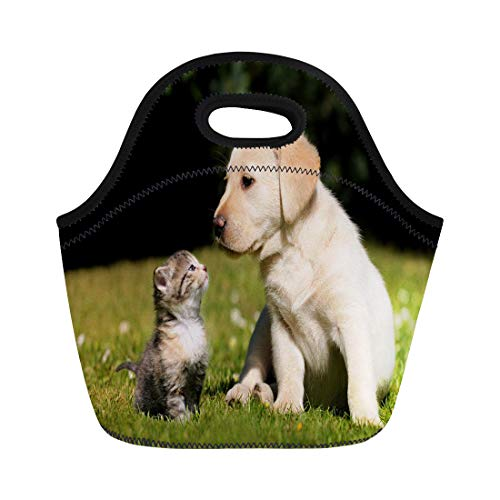 Semtomn Lunch Tote Bag Puppy Cat and Dog Kitten Cute Pet Funny Animal Reusable Neoprene Insulated Thermal Outdoor Picnic Lunchbox for Men -