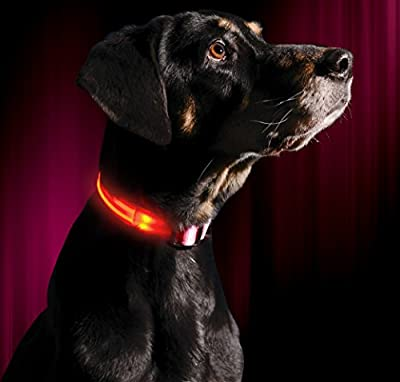 Illumiseen LED Dog Collar, USB Rechargeable