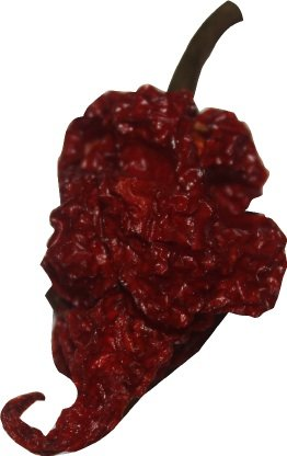 (Red Tail Scorpion Chili Peppers 10 Dried Trinidad Seed Pods Plus 2 Free, Hotter than Ghost Pepper)