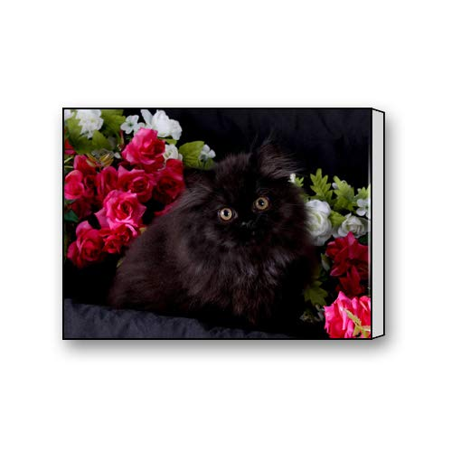 (Black Face Persian Cat Custom Canvas Print Personal Photos Print on Canvas Ready to Hang on Your Wall as a Modern Art 12